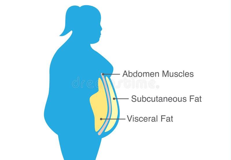Grasa gorda y subcutánea visceral que acumula alrededor de la cintura de la mujer ilustración del vector