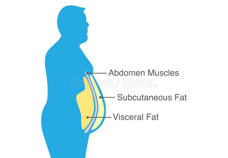 Grasa gorda y subcutánea visceral que acumula alrededor de su cintura libre illustration