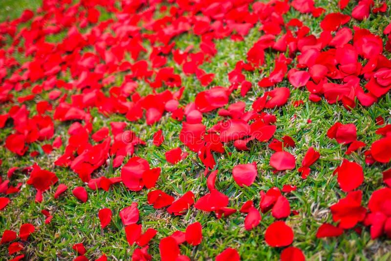 Grasabdeckung mit den Rosenblumenblättern lizenzfreies stockbild