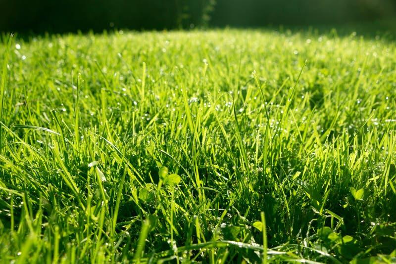 Grasachtergrond met dalingen royalty-vrije stock fotografie