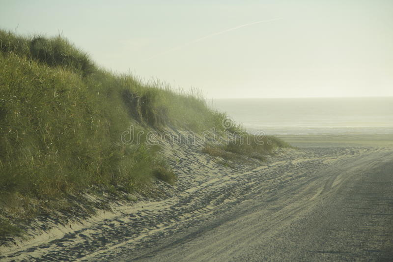 Grasartige Sanddüne am Strand lizenzfreies stockbild
