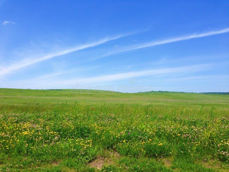 Grasartige Wiese und blauer Himmel lizenzfreie stockfotos