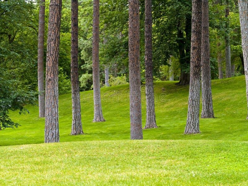 Grasartiger Park und Bäume stockfotos