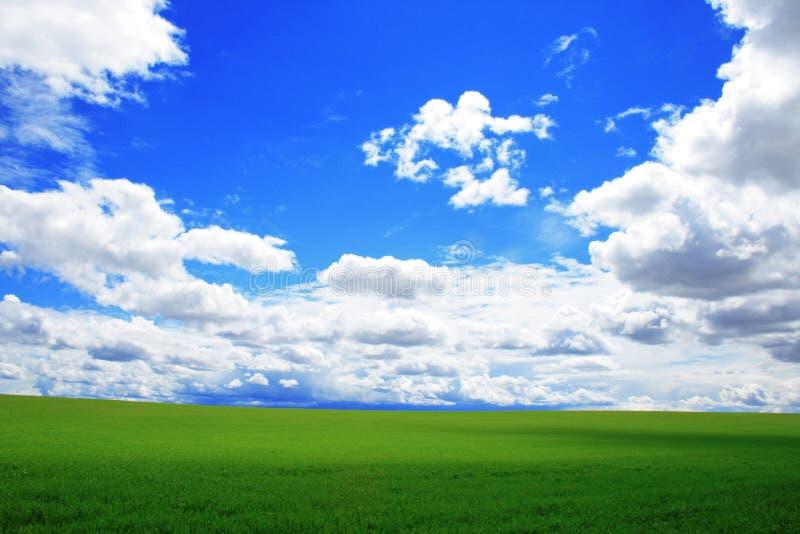 Grasartiges Feld und blauer Himmel lizenzfreie stockfotos