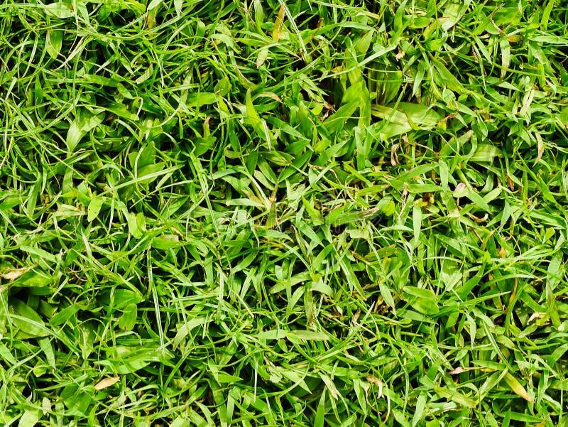 Grasbeschaffenheit oder Grashintergrund stockfoto
