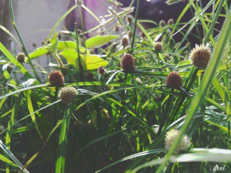 Grasbloemen royalty-vrije stock afbeeldingen