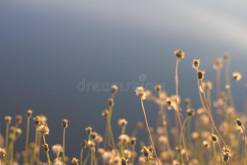 Grasbloemen stock fotografie