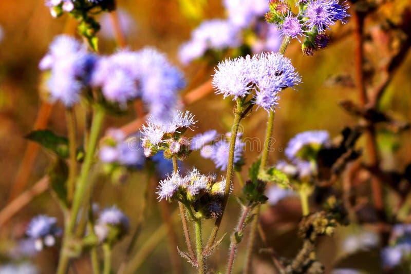 Grasbloemen bij stijging de landbouw stock afbeeldingen