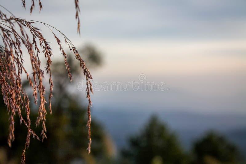 Grasbloemen en zonsopgangzonsondergang royalty-vrije stock fotografie