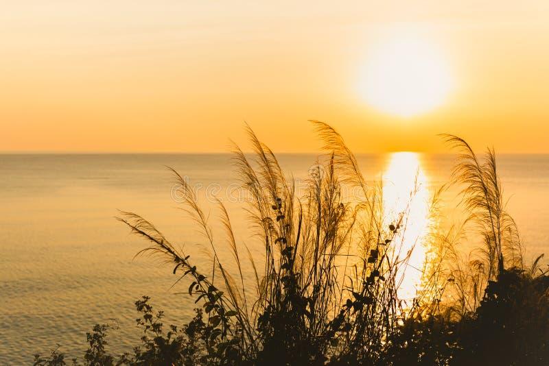 Grasblume mit Natursonnenuntergang Sonnenaufgang über Ozean lizenzfreie stockbilder