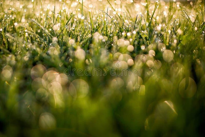 Grasdauwdruppels bokeh stock afbeeldingen