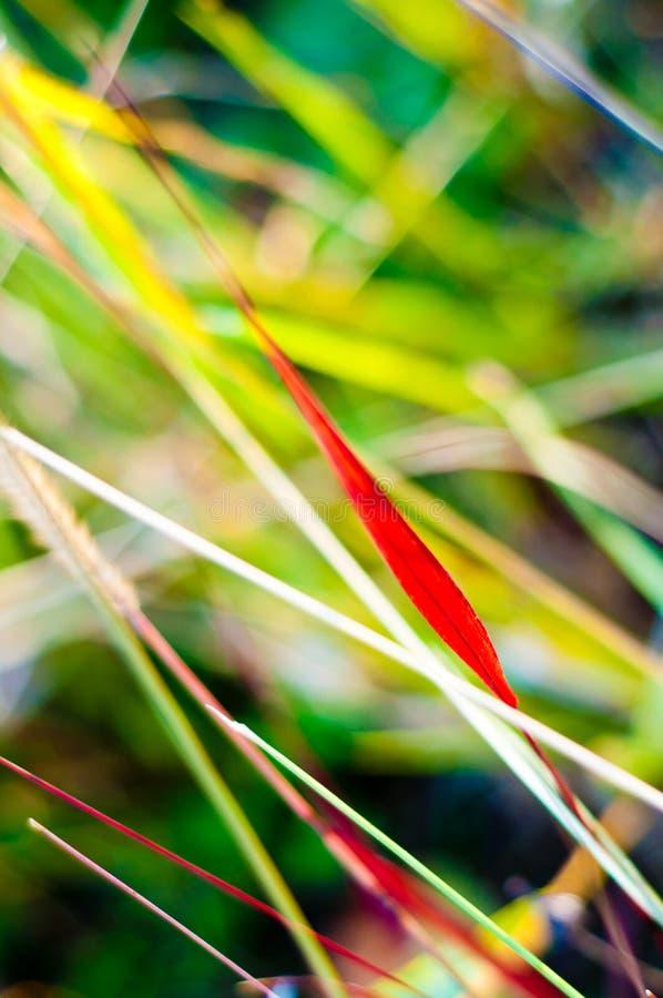 Grasfarben im Herbst. Naturhintergrund. stockfotografie