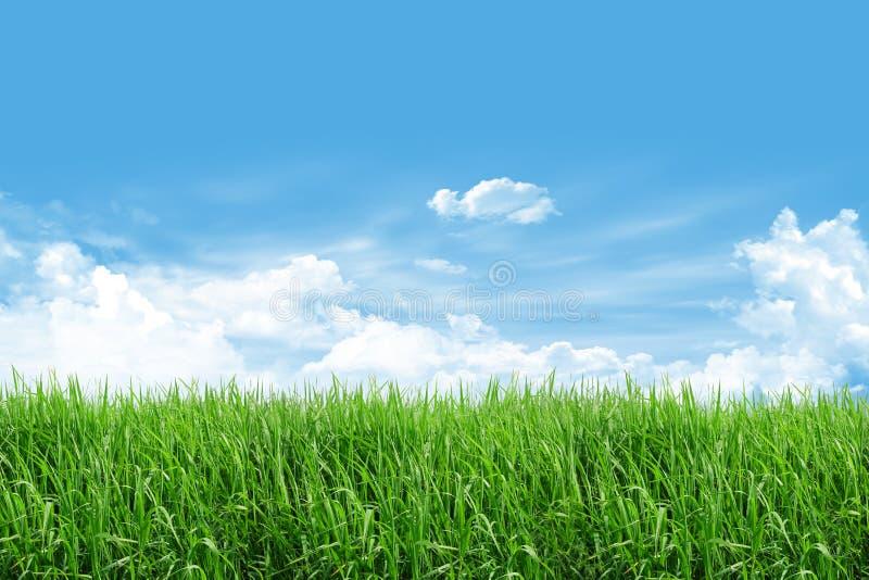 Grasfeld mit blauem Himmel stockbilder