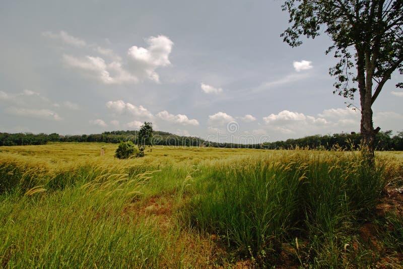 Grasfelder stockfotos