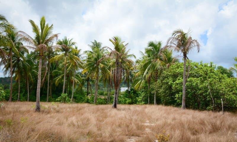 Grasgebied en palmen in Phu Quoc, Vietnam stock fotografie
