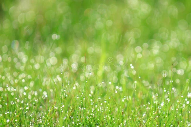 Grasgebied met dauw in de ochtend stock foto's