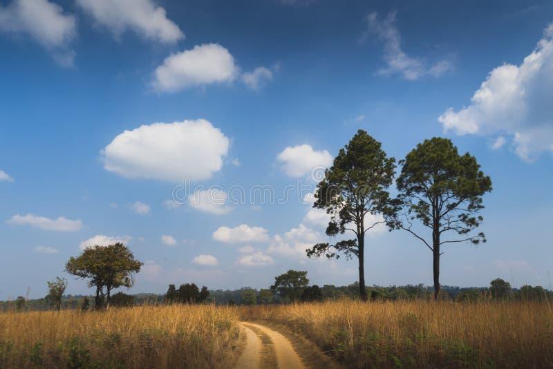 Grasgebieden onder de blauwe hemel royalty-vrije stock afbeelding