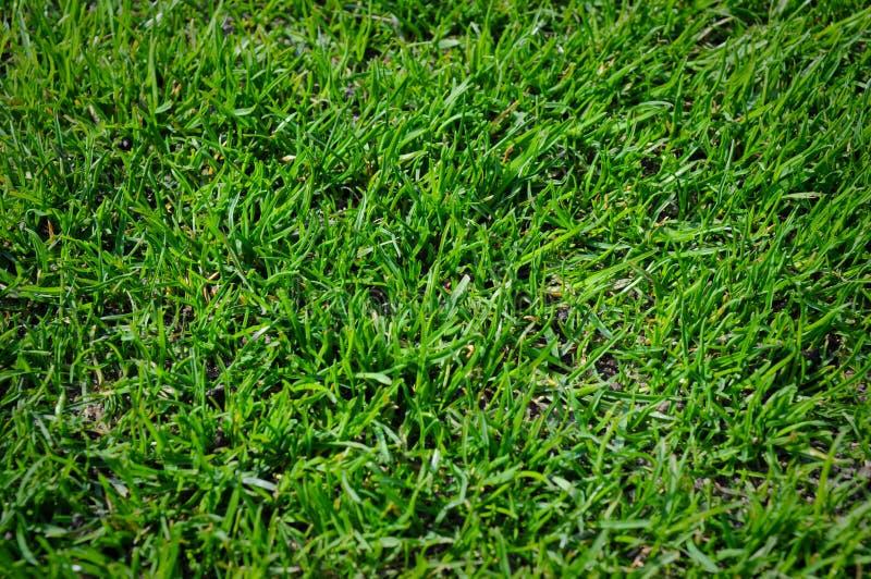 Grasgrün lizenzfreie stockfotografie