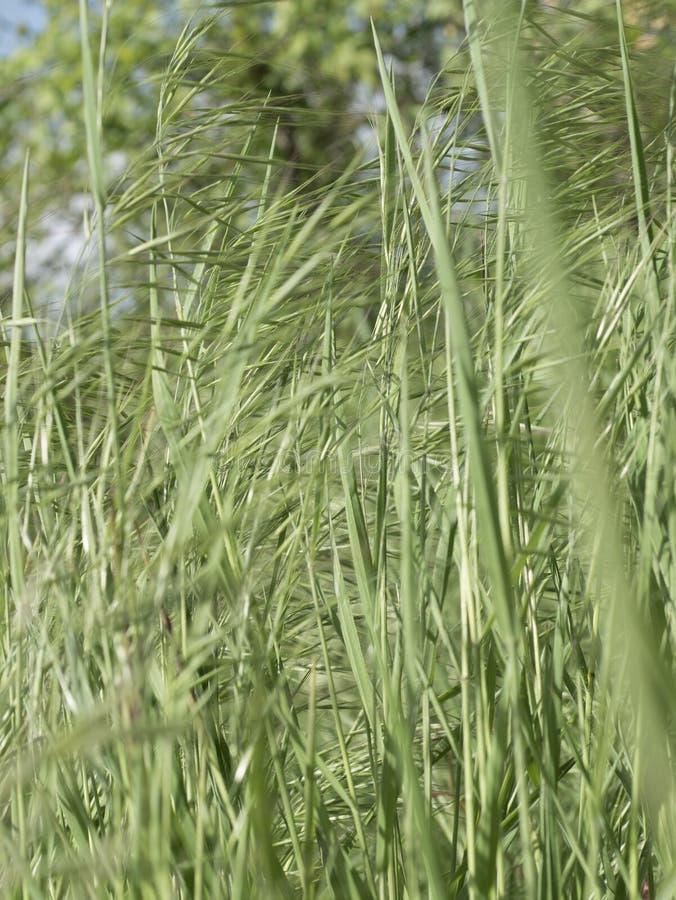 Grasgrün lang lizenzfreie stockfotografie