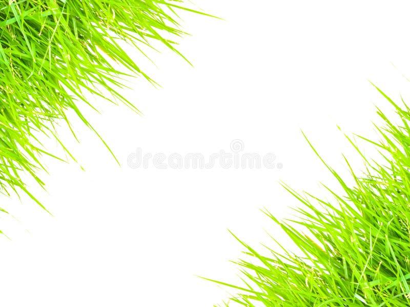 Grasgrenze-conner für Textrahmen stockbilder