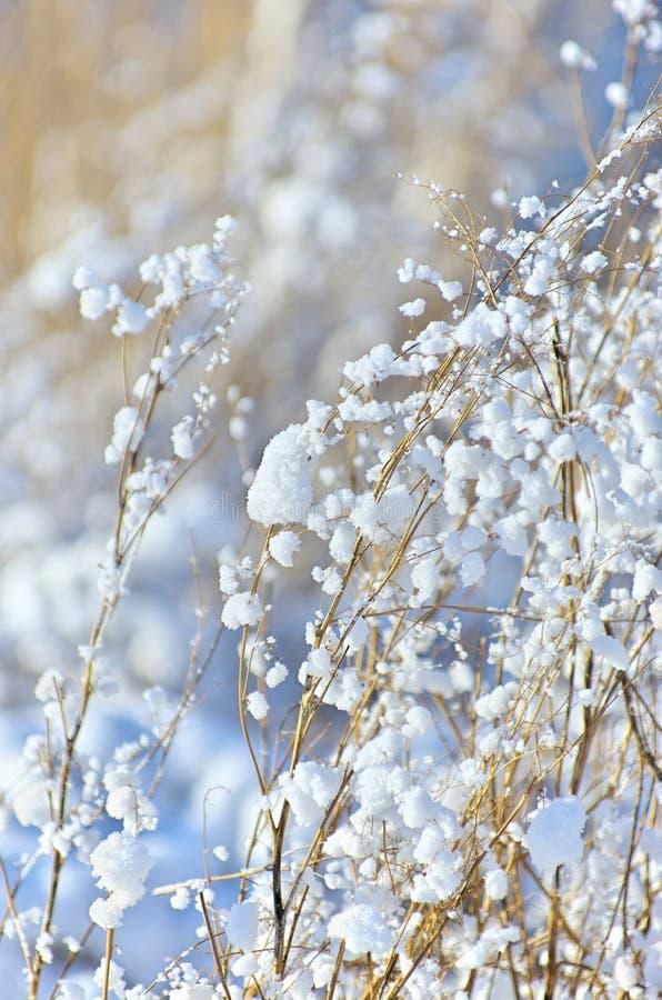 Grashalme mit Schneeflocken lizenzfreies stockfoto