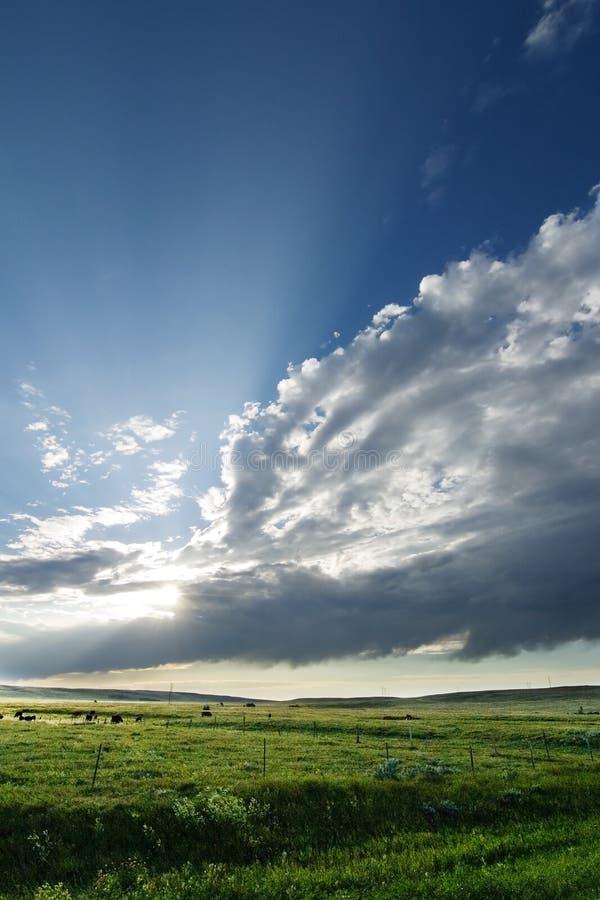 Grasland-Himmel-Landschaft lizenzfreie stockfotos