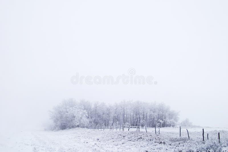 Grasland-Nebel lizenzfreie stockfotografie
