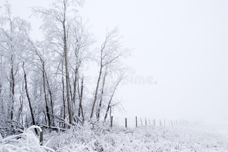 Grasland-Nebel lizenzfreies stockfoto