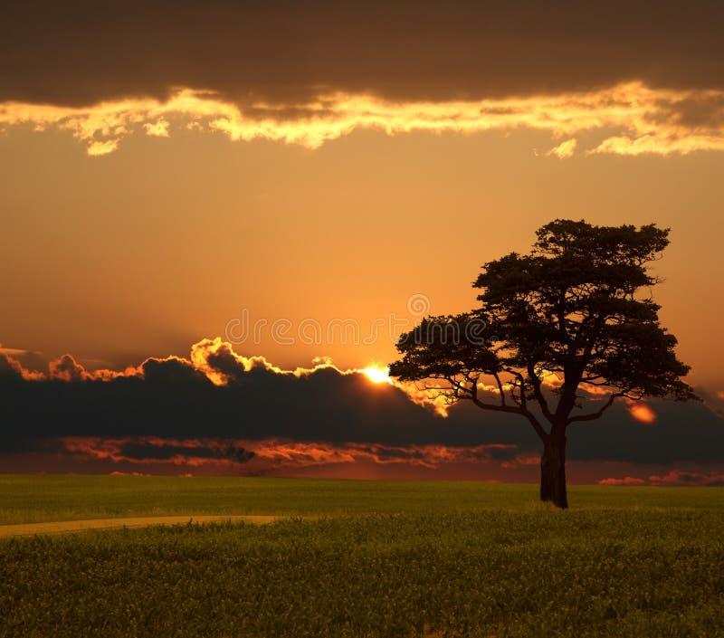 Grasland-Sonnenaufgang lizenzfreies stockbild