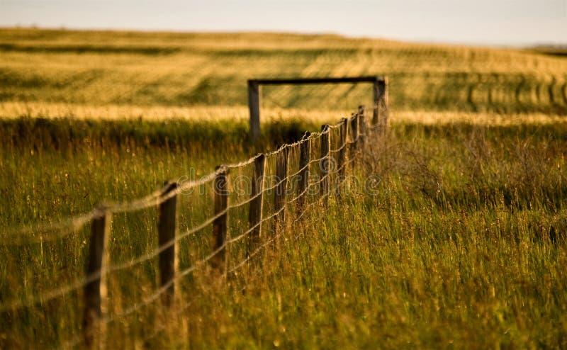 Grasland-Zaun-Zeile lizenzfreie stockfotos