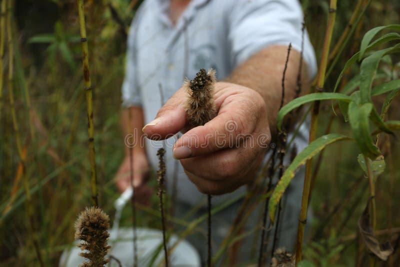 Graslandbetriebssamensammlung lizenzfreies stockbild