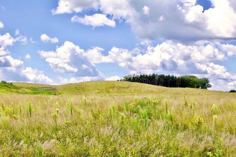 Graslandlandschaft stockbild