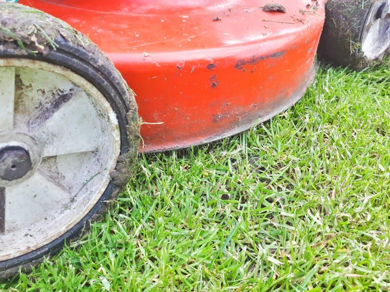 Grasmaaimachine die groen gras in binnenplaats snijden royalty-vrije stock fotografie