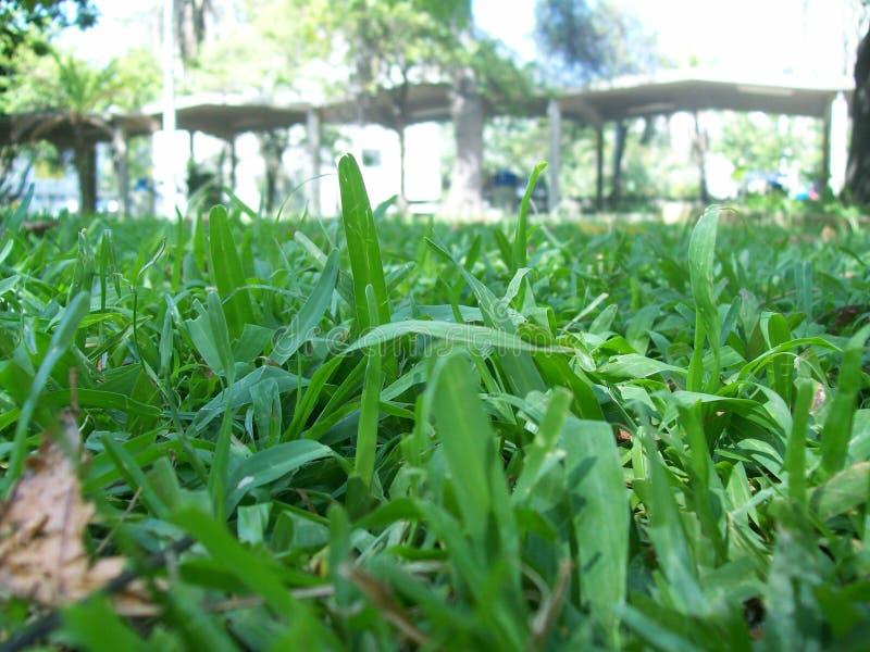 Grasnahaufnahme stockfoto