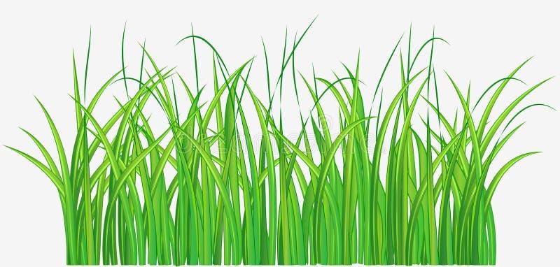Grasrijk gebied stock illustratie