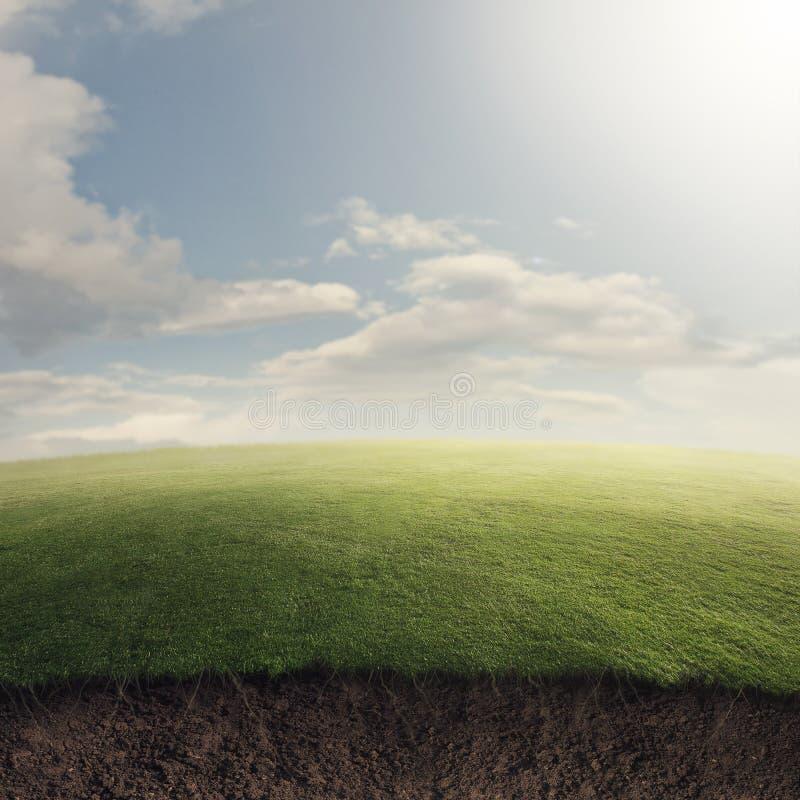 Grasrijk gebied ondergronds stock afbeeldingen