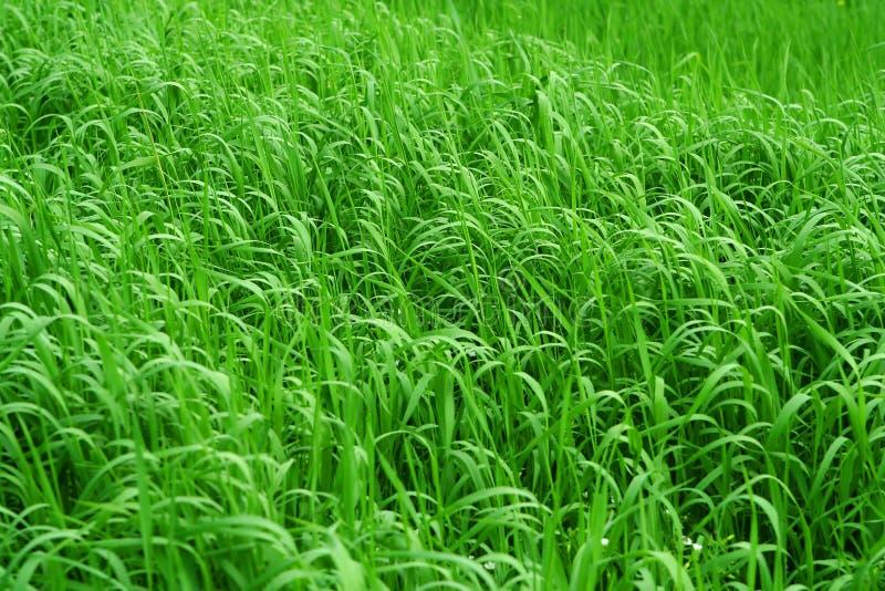 Grasrijke Achtergrond stock afbeelding