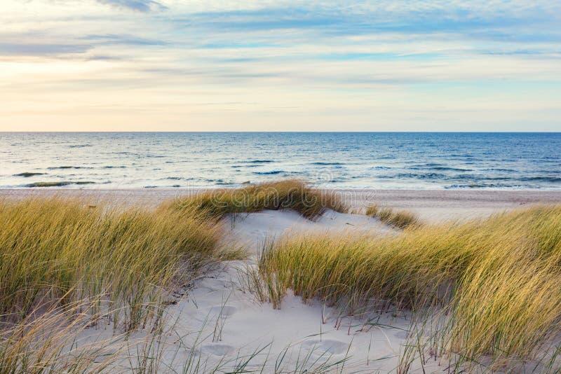 Grasrijke duinen en de Oostzee stock foto