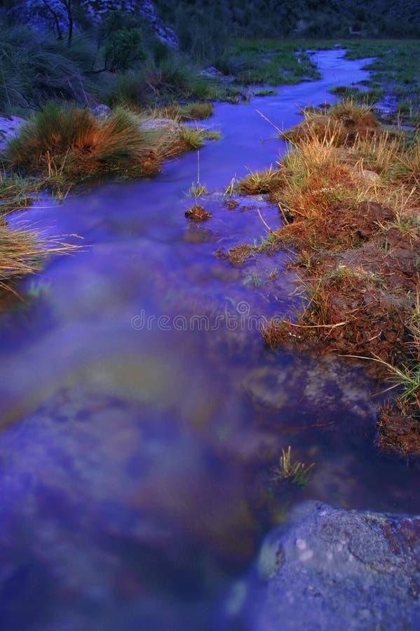 Grasrijke riverbank bij schemer stock afbeeldingen
