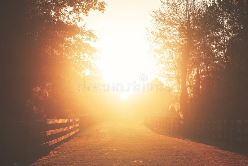 Grasrijke weg in zon royalty-vrije stock foto's