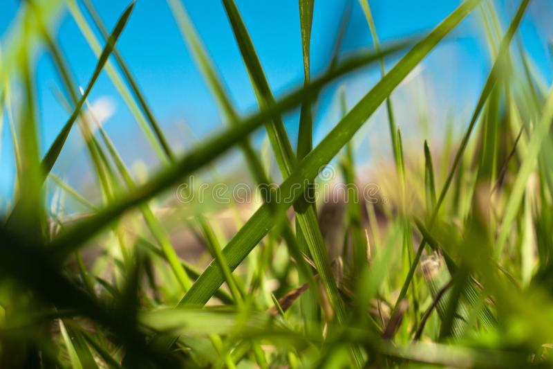 Grass 1 stock photography
