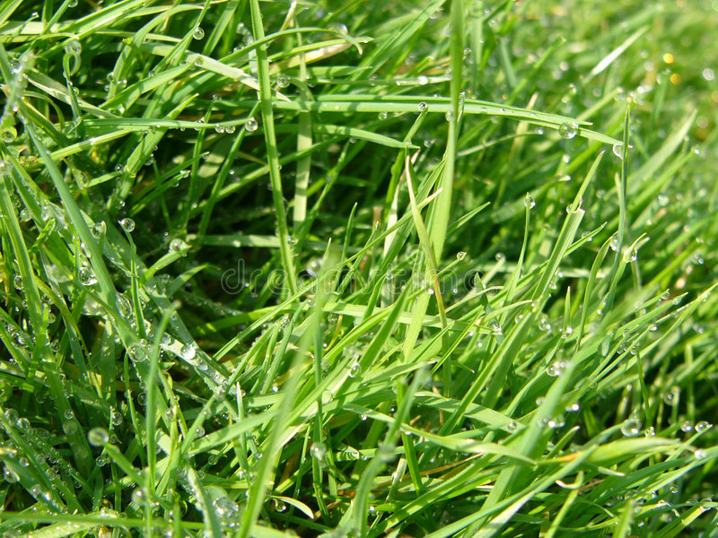 Download Grass stock image. Image of grassy, green, blades, lawn - 101193