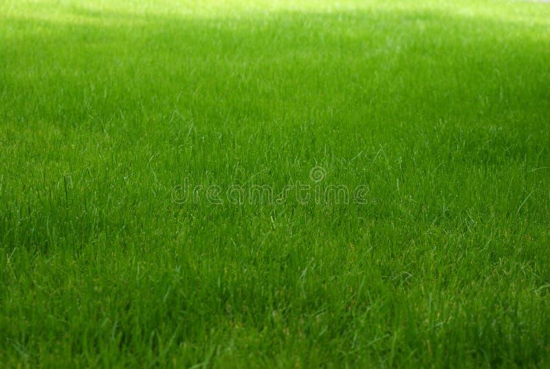 Grass. Green,rich,grass on the flower exhibition.Kijiv.Ukraine