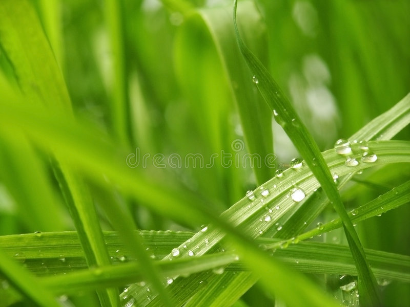 Download Grass stock photo. Image of lawn, river, nature, garden - 1113850