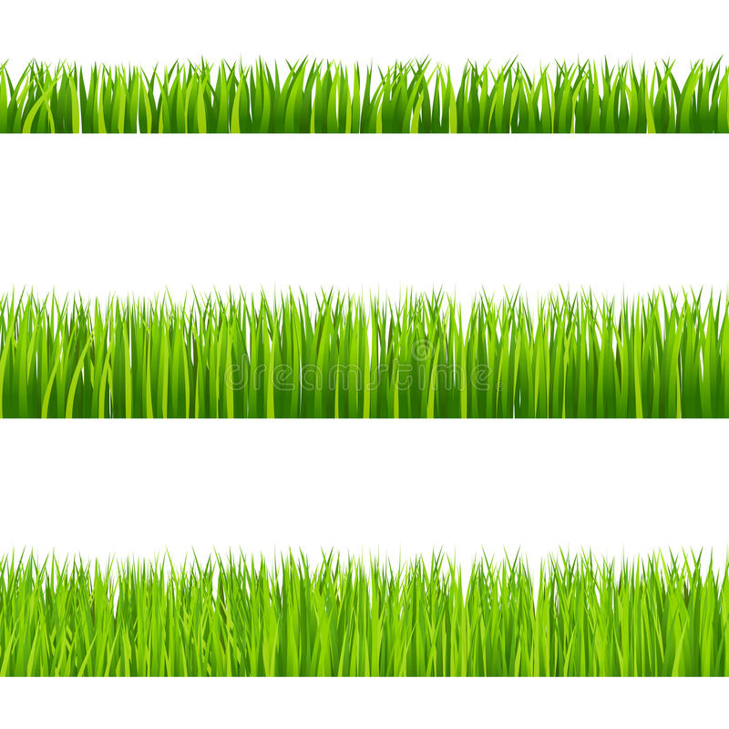 Grass. Illustration of isolated green grass