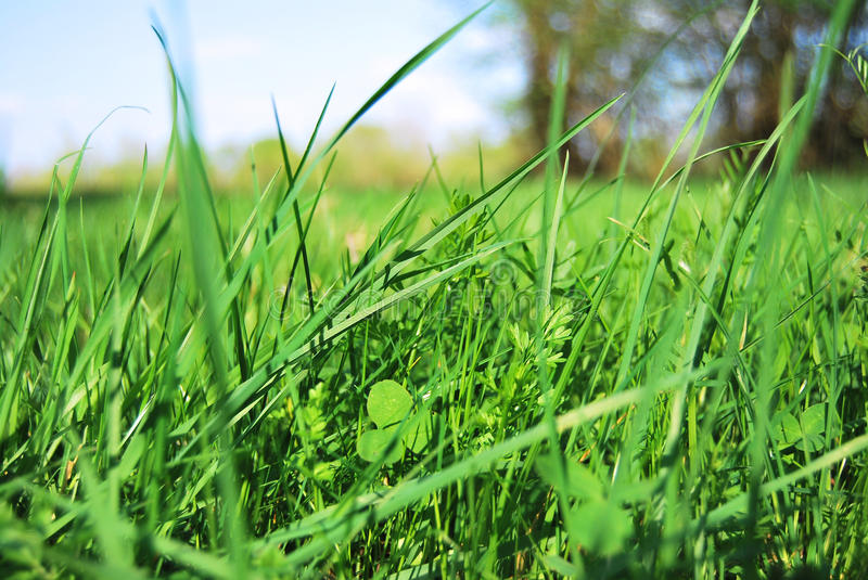 Download Grass stock photo. Image of clear, clover, background - 13952216