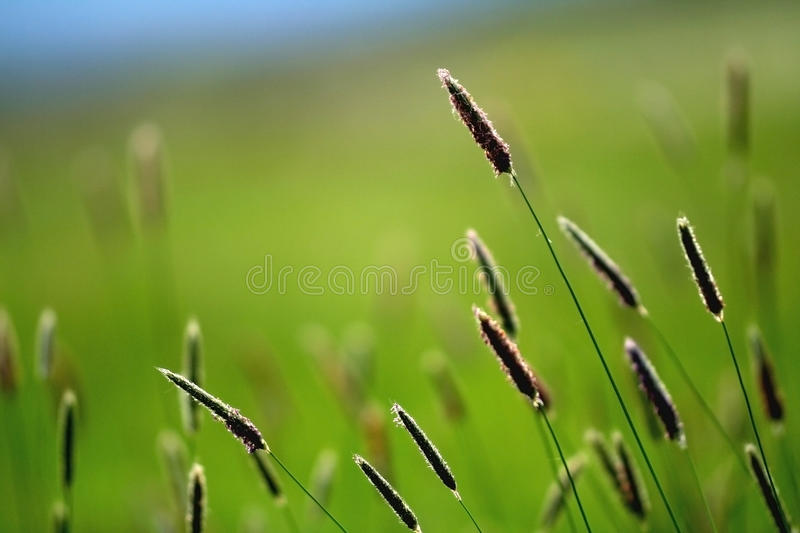 Download Grass stock photo. Image of nature, field, blue, blur - 14655944