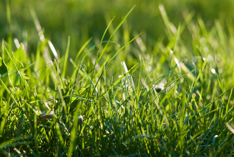 Download Grass stock image. Image of sunny, meadow, fresh, field - 14855169