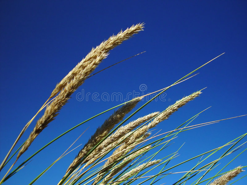 Download Grass stock photo. Image of below, clear, plant, empty, blue - 15442