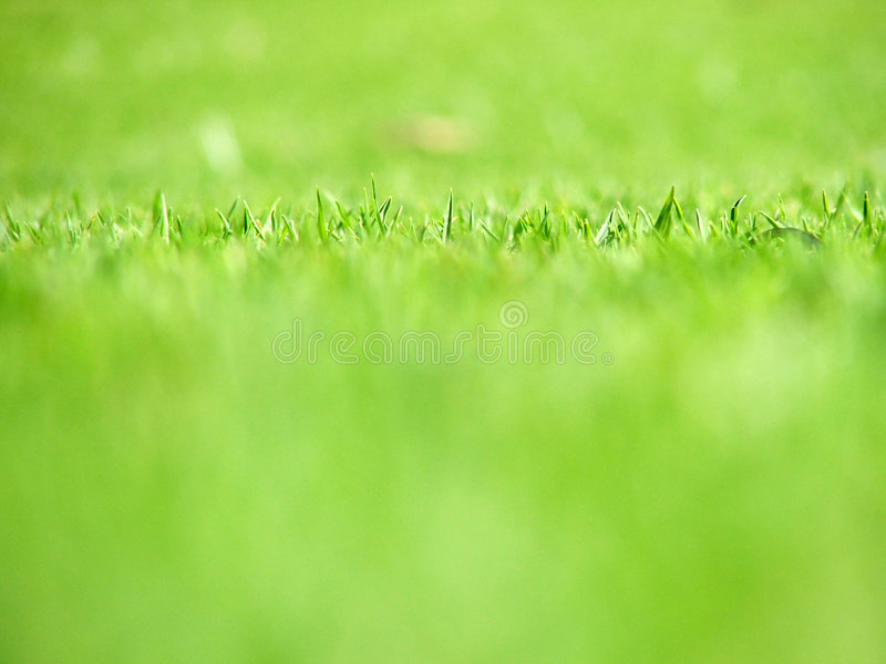 Download Grass Stock Photography - Image: 165502